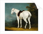 A Lady's Grey Hunter by Jacques-Laurent Agasse