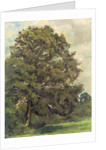 Study of an Ash Tree by Lionel Constable