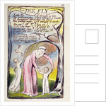 'The Fly' by William Blake