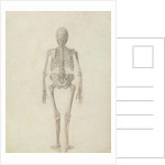 A Comparative Anatomical Exposition of the Structure of the Human Body with that of a Tiger and a Common Fowl: Human Skeleton, Posterior View by George Stubbs