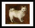 Spitz Dog by Thomas Gainsborough