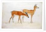 American Deer by Anthony Devis