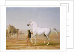 The Wellesley Grey Arabian led through the Desert by Jacques-Laurent Agasse