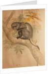 Stranger's Monkey by Joseph Wolf