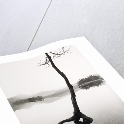 Flooded Tree by Fay Godwin