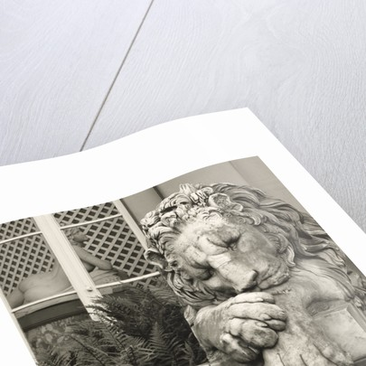 Chatsworth Lion by Fay Godwin