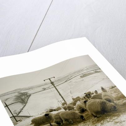 Ponden Moor by Fay Godwin
