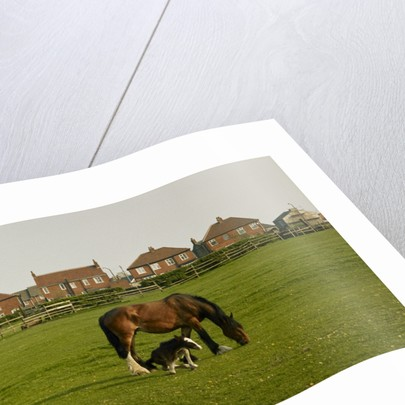 Horse and foal in Bradford by Fay Godwin