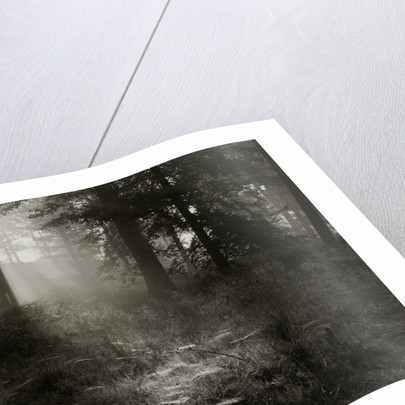 Forest by Fay Godwin