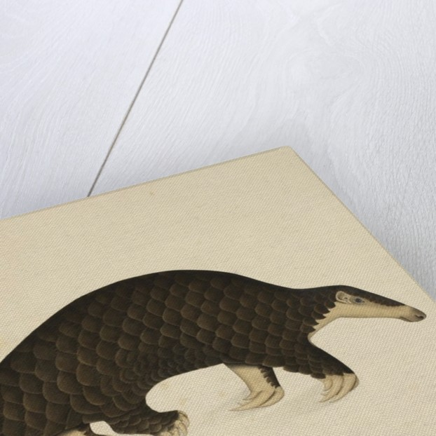 A scaly anteater by Anonymous