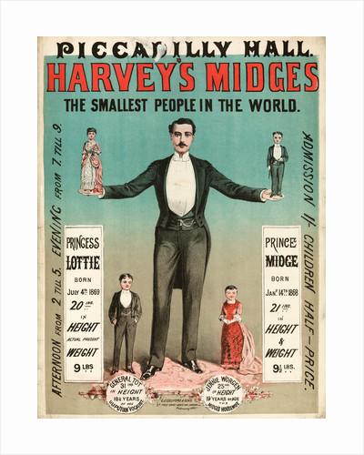 Harvey's midges by Anonymous