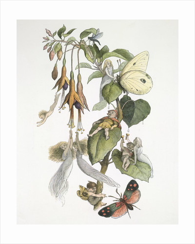 Feasting and fun among the fuschias by Richard Doyle