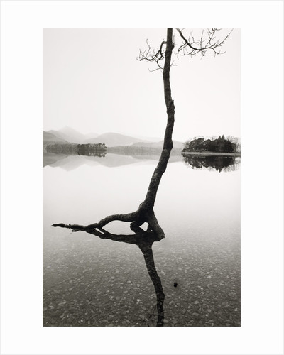 Flooded Tree by Fay Godwin