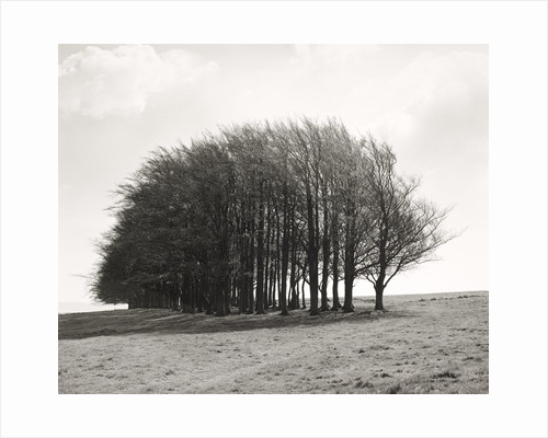 Barbury Castle Clump by Fay Godwin