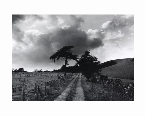 Roman Road by Fay Godwin