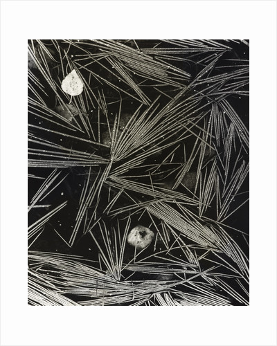 Flooded Grass by Fay Godwin