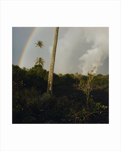 Rainbow above cloud forest by Fay Godwin