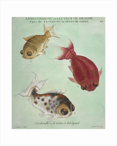 Long-Tsing-Yu trio of fish print by Edme Billardon-Sauvigne