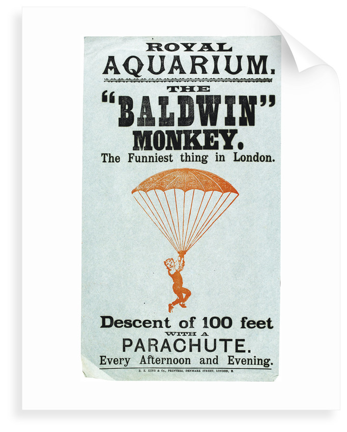 The Baldwin Monkey by Anonymous