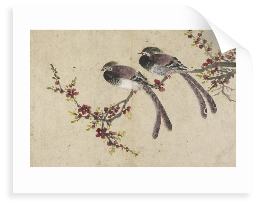 Long-tailed birds on plum tree branch by Kyomjae