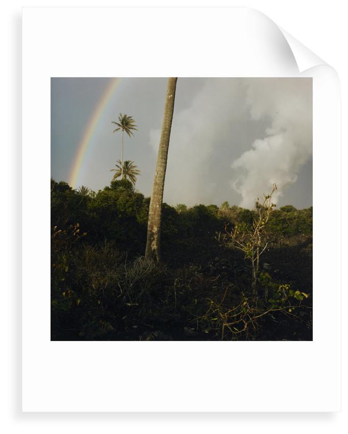 Rainbow above cloud forest by Fay Godwin