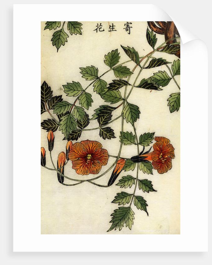 Trumpet flowers by Shimada Mitsufusa