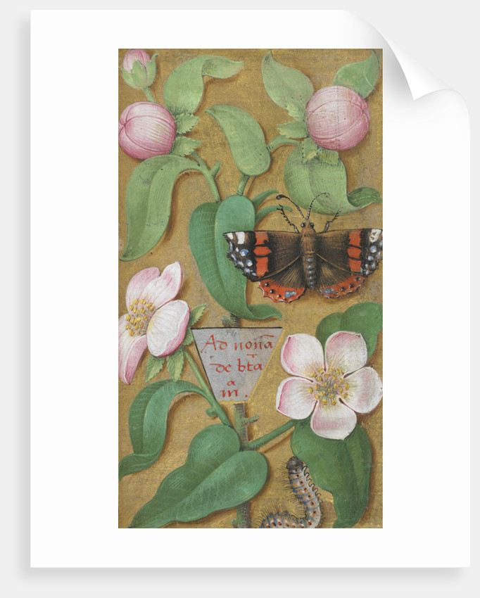 Flowers, caterpillar and butterfly by Anonymous