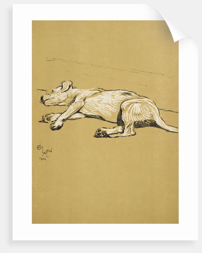 Dog by Cecil Aldin