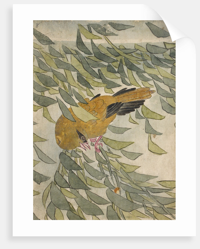 Golden oriole among leaves by Anonymous