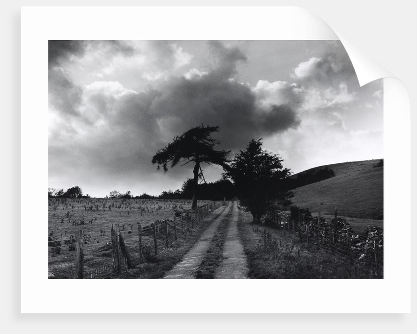 Roman Road by Fay Godwin
