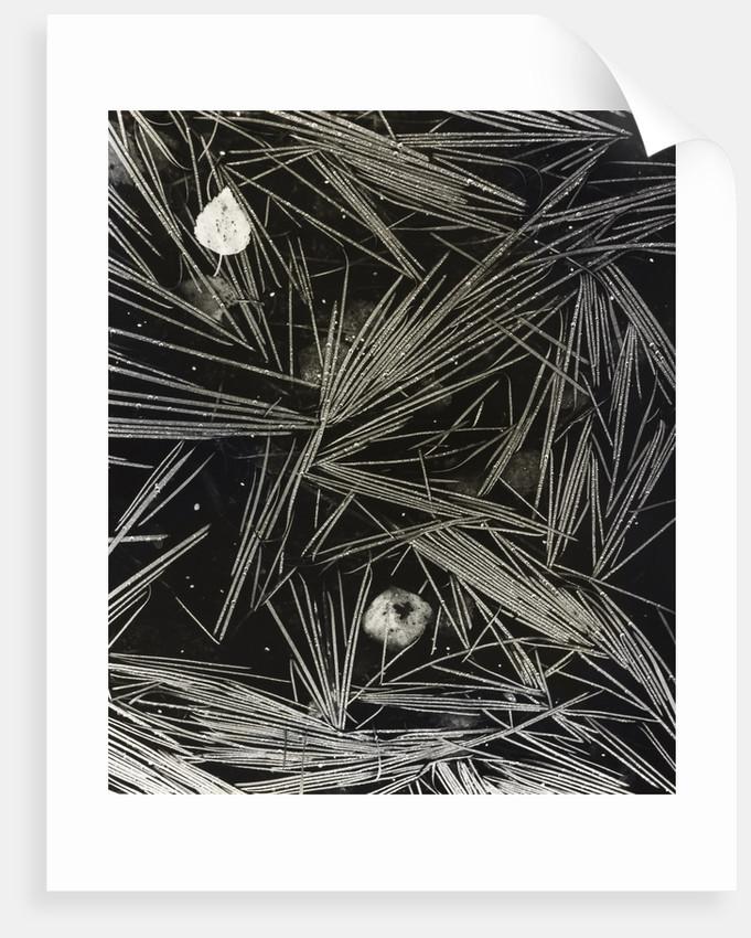 Flooded Grass by Fay Godwin