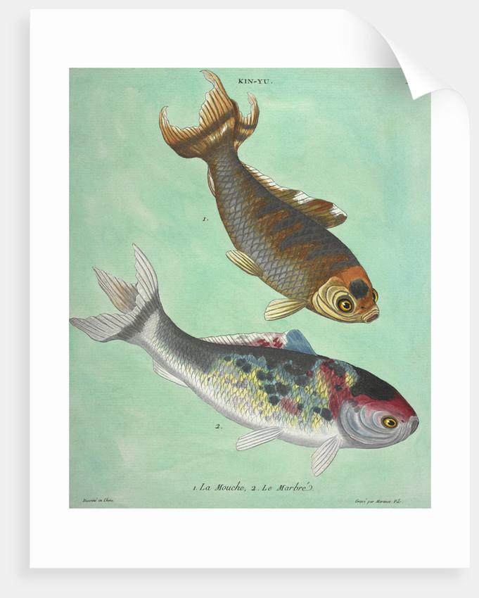 Kin-Yu: a pair of fish print by Edme Billardon-Sauvigne