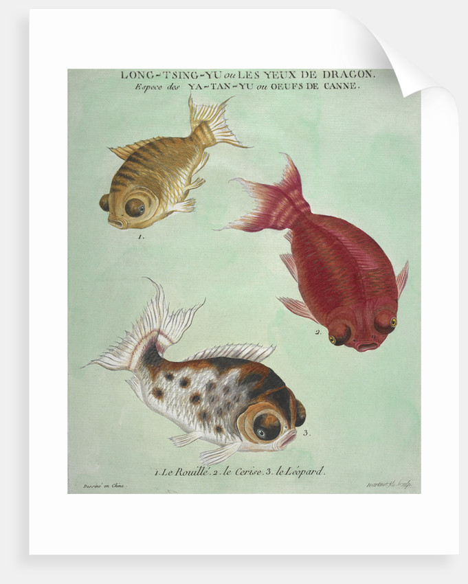 Long-Tsing-Yu trio of fish print by Edme Billardon-Sauvigne