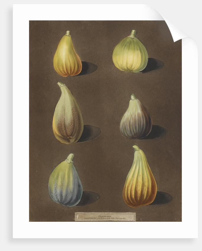 Figs by George Brookshaw