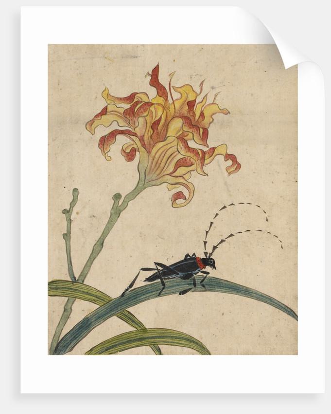 Beetle on a lily by Kyomjae