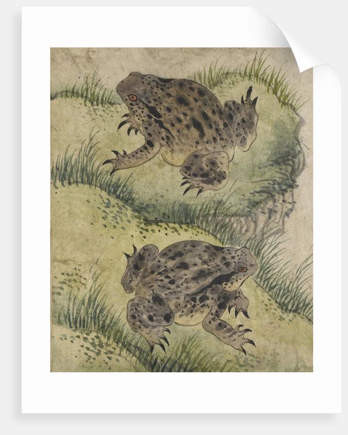 Toads on a grassy bank by Kyomjae