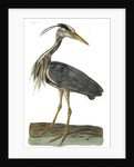 Heron by P Mazel Brown