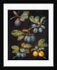 Plums by George Brookshaw