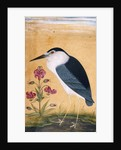 Night heron by Anonymous