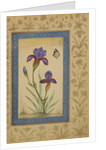 Blue iris with butterfly by Anonymous