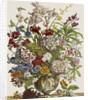 Flowers in a vase by Pieter Casteels