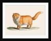 A ginger cat by J B Huet