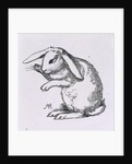 A rabbit by A Hughes