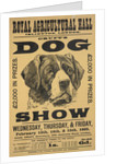 Cruft's dog show by Anonymous
