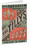 The Tillys by Anonymous
