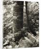 Lumb Valley by Fay Godwin