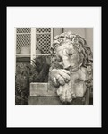 Chatsworth Lion by Fay Godwin
