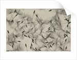 Dandelion seeds by William Henry Fox Talbot