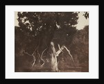 An aged red cedar in the grounds of Mount Edgcumbe by William Henry Fox Talbot