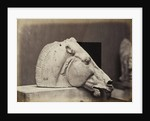 Sculptured Head of a horse by Leonida Caldesi